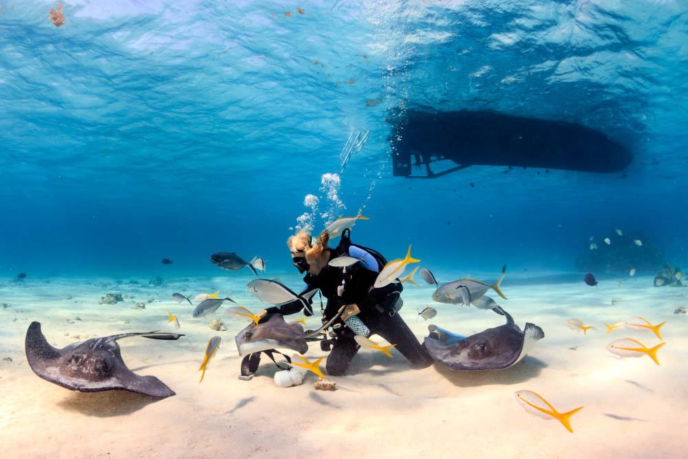 צלילה עם חתולי ים באיי קיימן