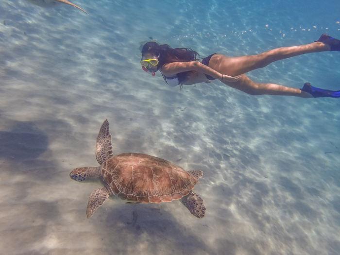 שחייה עם צבי ים בברבדוס