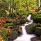 היער השחור, גרמניה - tourguides